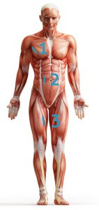 Körperfettmessung mit Caliper nach der 3-Falten-Methode bei Männern (Bild: Fotolia.com - Adimas)
