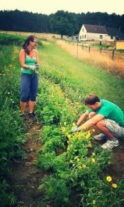 Meine Frau und ich am Feld unserer Solidarischen Landwirtschaft beim Mithilfetag. Da lernst du dein Gemüse so richtig schätzen! (Foto: Sepplashof)