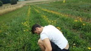 Als Mitglied einer Solidarischen Landwirtschaft ist wenn man möchte ab und zu auch Hilfe am Feld angesagt. So lernt man das frische Gemüse umso mehr schätzen!