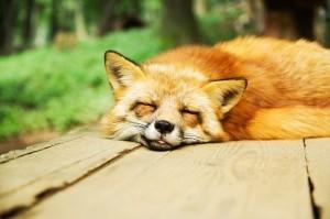 Achte auf ausreichend Schlaf!