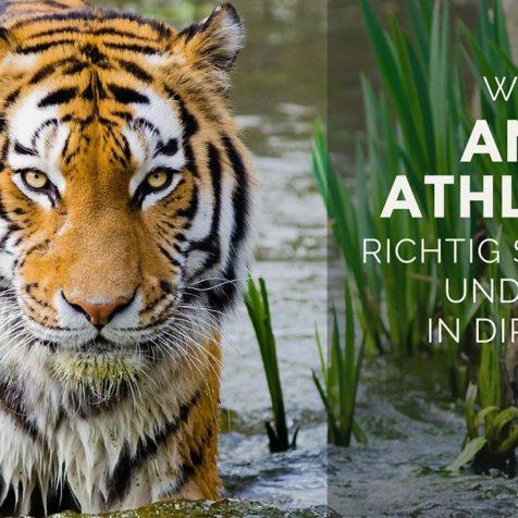 Wie du mit Animal Athletics richtig startest und das Tier in dir weckst