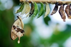 Du musst nicht zu einem anderen Menschen werden, wenn du dich veränderst. Du kannst du selbst bleiben, wie eine Raupe, die zum Schmetterling wird.