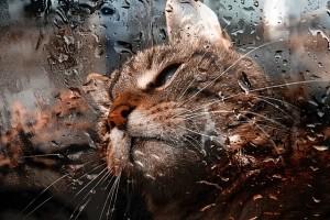 Wenn das Wetter mal so schlecht ist, dass du nicht mal deine Katze vor die Tür lassen würdest: Mach einfach ein Homeworkout und trainiere mit deinem eigenen Körpergewicht!