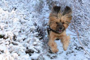 Sport mit Hund macht Spaß!