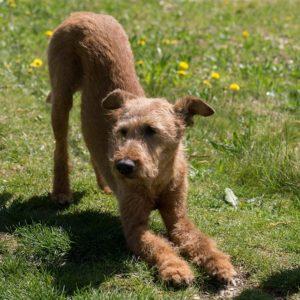 Beim Doga wird Sport mit Hund und Yoga verbunden.