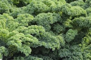 Grünkohl: Das immergrüne Wintergemüse unter den Superfoods.