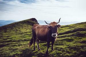 Die vegane Ernährung kann nicht nur aus einem gesundheitlichen, sondern vor allem auch aus einem ethischen Blickwinkel betrachtet werden. Tiere werden dabei nicht länger gehalten, um Nutzen aus ihnen zu ziehen - tierische Produkte sind, vor allem in der Ernährung - tabu.