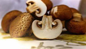 Pilze stellen ein super Lebensmittel zum Abnehmen dar, da sie kaum Kalorien und dabei relativ viel Eiweiß enthalten.