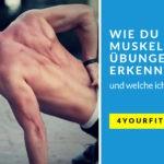 Wie du gute Muskelaufbau Übungen erkennst und welche ich dir empfehle