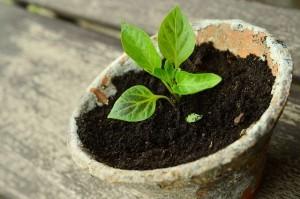 Lass die zarte Pflanze des Optimismus gedeihen und gieße sie regelmäßig mit meinen Tipps, dann hast du schon bald einen fest verwurzelten Baum.