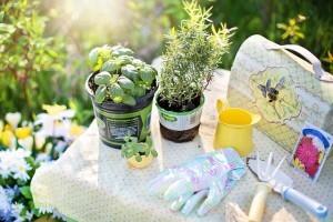 Jeder der einen Garten hat, sollte sich einen kleinen Kräutergarten anlegen. Denn unsere heimischen Kräuter sind lecker und gesund!