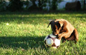 Die meisten Hunde lieben Bälle - achte darauf, dass sich dein Hund damit nicht verletzen kann.