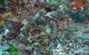Im Tarnen und Täuschen bei Nahrungsmitteln sind Weizen und Zucker so gut wie Steinfische am Meeresgrund. Wenn du ihre Verstecke aber kennst, können sie dich nicht mehr überraschen. Weder Zucker, noch Weizen, noch der Steinfisch. ;-)