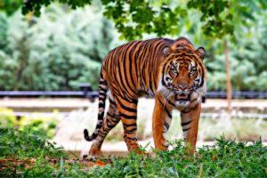 Animal Athletics hilft dir dabei, wieder beweglicher zu werden. Bewege dich kraftvoll und geschmeidig wie ein Tiger! :-)